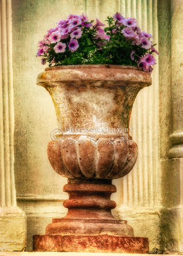 A photo of an urn filled with beatiful purple flowers overlayed with a creative texture.