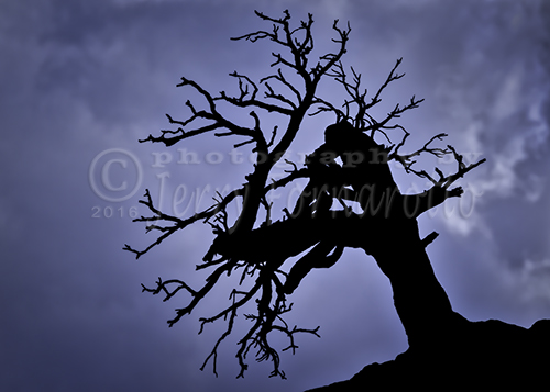 A dead tree photographed against a stormy sky in Zion National Park.