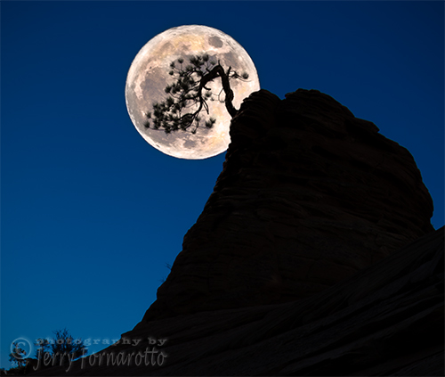 Pinon Pine and Moon Zion National Park