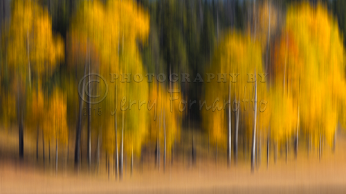 Golden Trees Blur