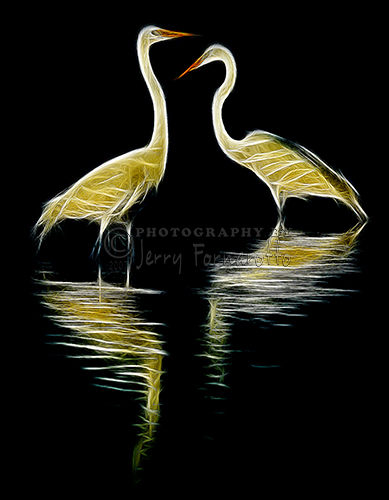 A creative image of a pair of Great Egrets.