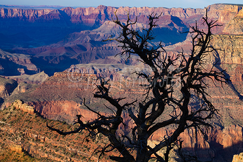 Lipan Overlook Grand Canyon 1