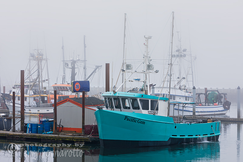 "Newport, Oregon is the ""Dungeness Crab Capital of the World"". Newport's fleet of commercial fishing boats is harbored in Yaquina Bay."