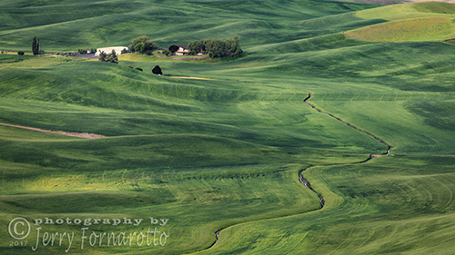 Palouse Green Fields