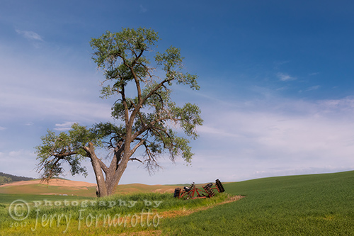 Old Tree in the Palouse