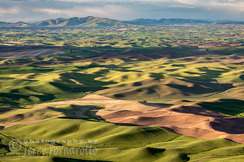 View of the Palouse