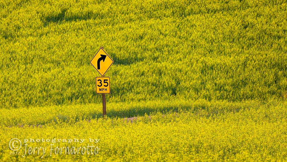 Sign in Canola Field