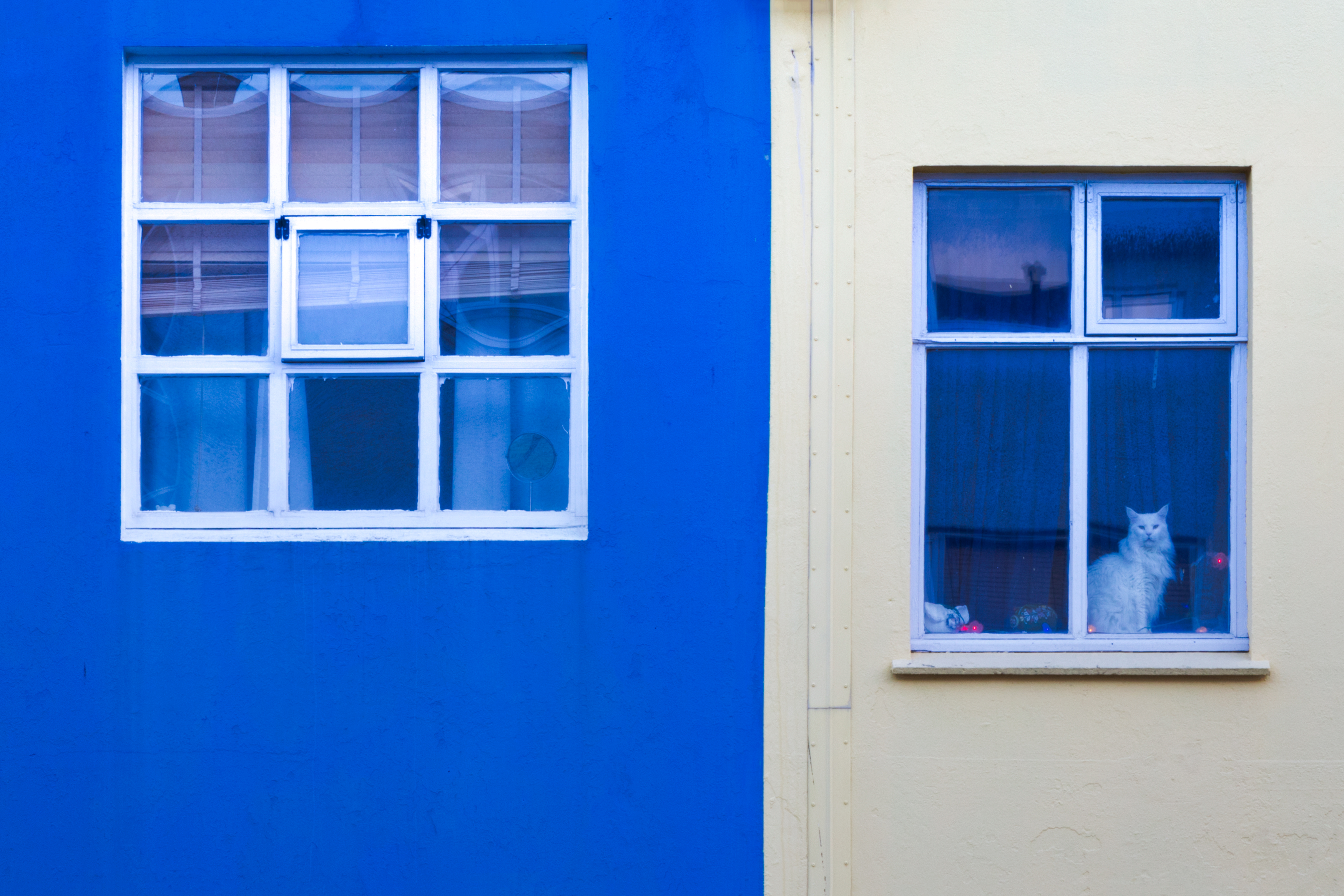 A cat sitting in an apartment window in Reykjavik, Iceland.